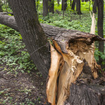 injuries from fallen trees in NYC