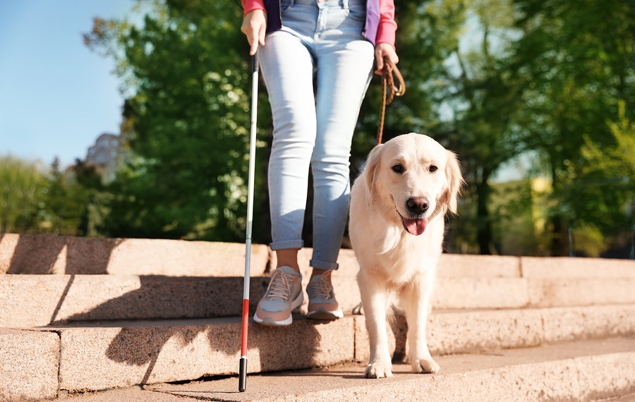 bigstock Guide Dog Helping Blind Person